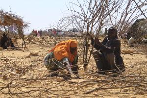 klimatflyktingar bygger koja i somaliland