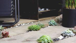 Malliparvekkeen lattialla on kelottunutta lankkua, koristekiviä ja mehikasveja.