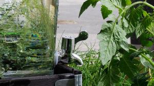 Hanallinen vesiastia puutarhassa.