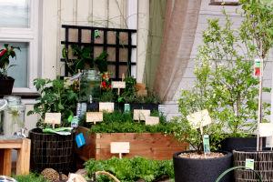 Avomaankurkku, kirsikkatomaatti, parsa, potatom, yrttejä, salaattia, pensasmustikka, rungollinen punaherukka