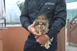 Kanin på Söderbloms trädgård
