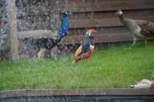 Fåglar på Söderbloms trädgård i Sibbo