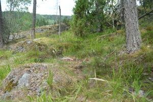 Här ska den nya terrängscyklingsleden gå, men här är marken ännu inte bearbetad.