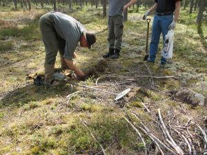 Metalldetektorn ger rätt många utslag vid Harparskoglinjen och området vid den kommande scenen.