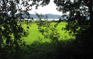 Vihreä pelto hehkuu kesäpäivän valoa.