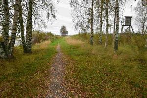 En stig längs åmynningen av Kimo å tagen under tidig höst. Till höger finns ett utkikstorn.