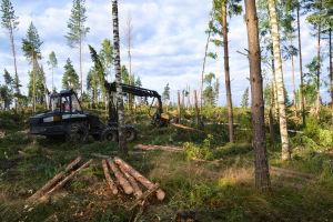 Skogsmaskinen i skogen
