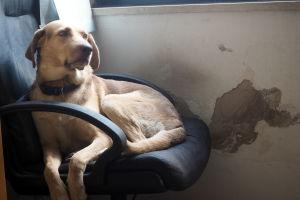 Beniamino Saccos hund Oscar föjer honom troget i kyrkan.