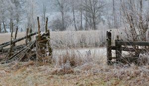 Ett gammalt staket täckt av frost