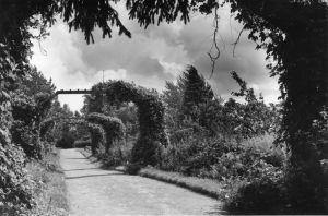 Vanha mustavalkovalokuva Hörtsänän arboretumista Orivedellä, kuvassa käytävä, jossa portteja, joissa kasvaa köynnöskasveja. Kuva vuodelta 1937.