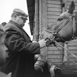 Ohjaaja Matti Tapio ja kuvauksissa käytetty hevonen tv-draamassa Lennu (1967).
