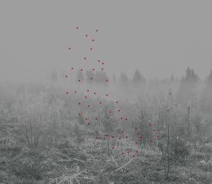 Mustavalkoinen kuva, metsää ja punaisia pisteitä.
