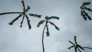 Puusta ja jätemateriaalista tehtyjä palmu-veistoksia.
