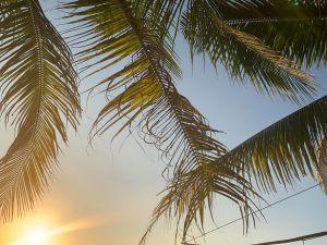 palmun oksia