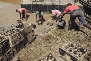 Miehiä joenrannassa nostamassa juomapullokoreja rantaan.