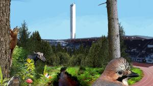 Olympiastadionilla kasvaa suomalaista talousmetsää ja siellä on eläimiä