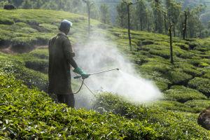En anställd på en plantage i delstaten Kerala i Indien sprutar bekämpningsmedel.