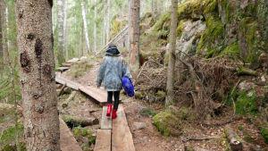 Hildá Länsman kävelee poispäin metsässä pitkospuilla