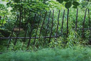 Skrangligt stängsel omgärdad av grönskande buskar och gräs.