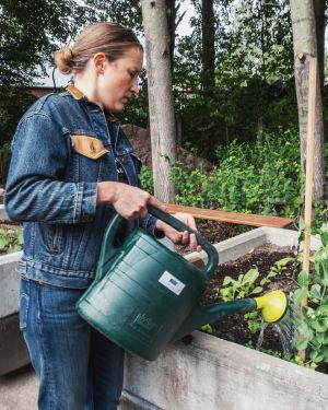 Farkkuihin ja farkkutakkiin pukeutunut nainen kastelee kastelukannulla viljelylaatikossa kasvavia kasveja.