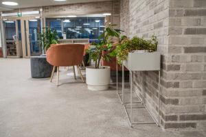 Grönväxter och stolar i aula