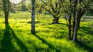 puita ja niittyä