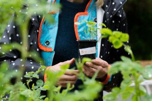 Harriet Abrahamsson håller en broccoliplanta i handen på sin odlingslott i Toimela odlingsträdgård.