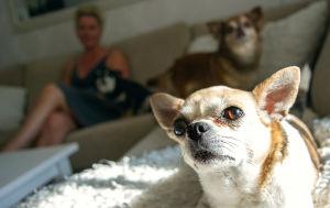 Kati sohvalla koirien kanssa.
