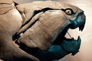 Fossil av fisken Dunkleosteus.