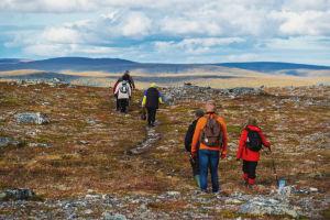 Grupp med människor vandrar på rad genom höstfärgat fjällandskap.