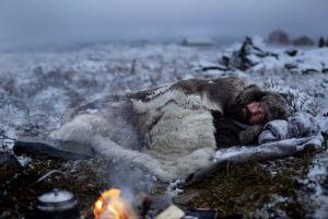 På bilden syns skådespelaren Stig Henrik Hoff ligga insvept i pälsplädar intill en brasa i ett snöigt fjällandskap.