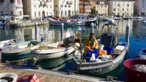 Små fiskebåtar i den pittoreska slovenska kuststaden Piran.