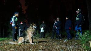 En hund och några människor står i en ring på en spånbana under lampljus på natten.