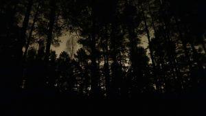 Silhuetten av träd mot mörk himmel.