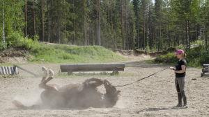 Maija Vesterinen hevosensa kanssa hiekkakentällä. Hevonen piehtaroi maassa.