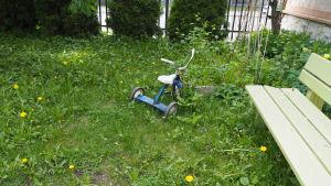 blå trehjuling på rufsig gräsmatta med maskrosor och bänk