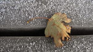 Lite nysnö som fallit på ett visset löv som ligger på en trätrappa.