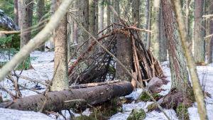 Koja i en vintrig skog