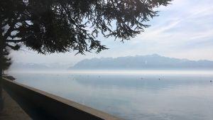 Vy över Genevesjön från staden Lausanne.