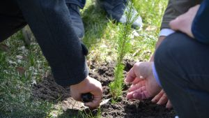 Planteringsceremoni av Framtidens gran i Borgå 12.05.17