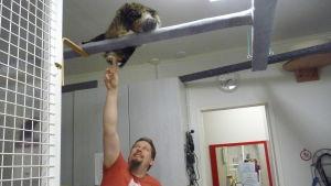 Johan Holmberg på hittedjurshemmet Skeppsdal family leker med katt som finns högt uppe på en ställning.