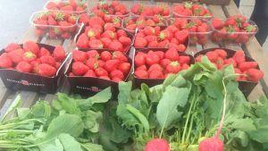 Finländska jordgubbar och rädisor på torget 25 maj.