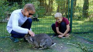 En kvinna med blå tröja och solglasögon och en ung pojke med vinröd t-skjorta sitter på huk i en inhängnad och kvinnan klappar en gråvit stor kanin på huvudet. Det är sommar och grönt i bakgrunden.