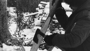 Tapio Wirkkala käyttää kirvestään