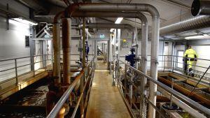 Reningsverket på Tyska holmen, bassänger med brunt vatten och stora tjocka rör i taket.