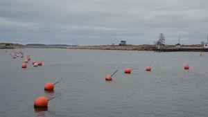 Höstbild från Östra hamnen i Hangö.