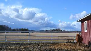 Ponny i förgrunden, åkrar, blå himmel.