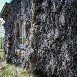 Kuivilla kanervilla päällystetty mökin seinä.