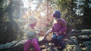 Kaksi tyttöä istuu mättäällä sienimetsässä.