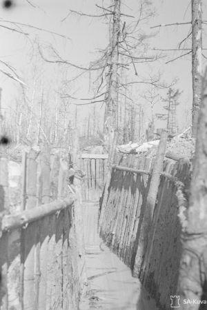 Taisteluhautaa Rajajoen rautatielohkon oikealla sivustalla toukokuussa 1944.